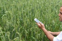 有巧妙的电话的农夫在他豪华的绿色麦子农场前面 免版税库存照片