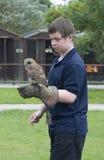 有布朗木头猫头鹰的男孩 库存照片