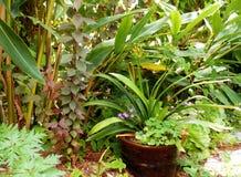 有布朗陶瓷罐的绿色庭院 免版税库存图片