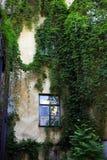 有常春藤的庭院在墙壁上 库存图片