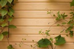 有常春藤的木墙壁 免版税库存图片