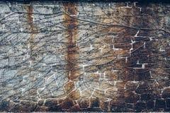有常春藤的老古老葡萄酒石头砖墙 免版税库存照片