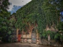 有常春藤的老房子 免版税图库摄影