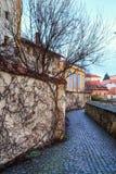 有常春藤覆盖的墙壁的老被铺的街道 Znojmo,捷克 免版税图库摄影