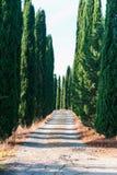 有常青柏和走道的典型的托斯坎乡下 免版税库存照片