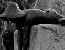 有帽子的年轻男孩在喷泉 库存照片