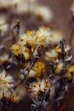 有干微小的花的蓬松植物 免版税库存图片