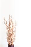 有干燥分支的花瓶在白色 免版税库存图片