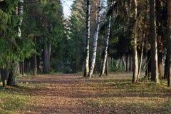 有干燥叶子的美丽的秋天森林, 免版税库存图片