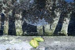 有干燥叶子的老被绘的水泥墙壁 免版税图库摄影