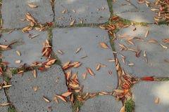 有干燥秋叶的路面或边路瓦片 免版税库存图片