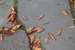 有干燥秋叶的,顶视图路面或边路瓦片 库存照片