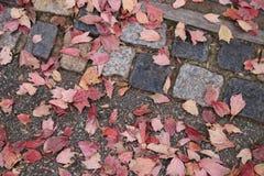 有干燥秋叶的,顶视图路面或边路瓦片 免版税库存图片
