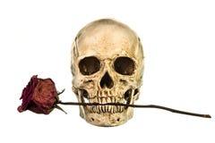 有干燥红色玫瑰的头骨在牙 免版税库存图片