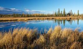 有干燥黄色草和树的反射的湖 免版税图库摄影