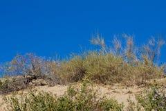 有干草原的沙子的植物 库存图片
