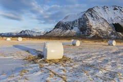有干草捆的农田在Gimsoya海岛, L多雪的平原  免版税库存图片