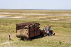 有干草的拖拉机 免版税图库摄影