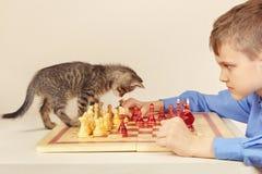 有平纹小猫的小高段棋手下棋 库存照片