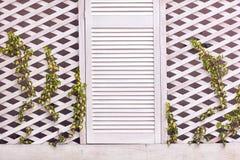 有年轻编织的常春藤植物的木格子门面墙壁 免版税库存照片
