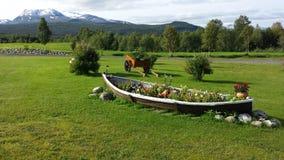 有庄严不同的花的美丽的老木小船花圃有多雪的山背景 库存照片