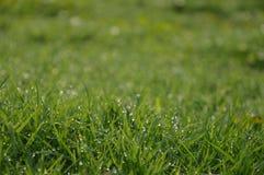 有应得物的弄脏的草甸 免版税库存照片