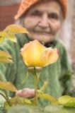 有庭院玫瑰的资深妇女 免版税库存图片