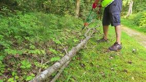 有庭院的工作者剪王牌干燥树 影视素材