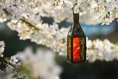 有开花樱桃flo的摩洛哥玻璃和金属灯笼灯 免版税库存照片