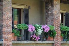 有开花的典型的古典意大利房子阳台开花 维罗纳 意大利 库存图片