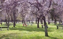 有开花的树的城市公园在春天 库存图片