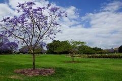 有开花的树的市内贫民区公园在春天 免版税库存照片