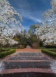 有开花的树的春天庭院 库存图片