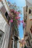 有开花的树的狭窄的街道 免版税库存图片