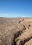有开花的植物的侵蚀沟壑 免版税库存照片