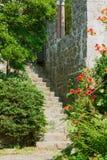 有开花的灌木的古老台阶 免版税库存照片