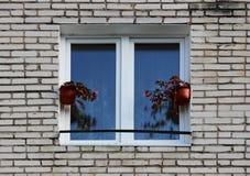 有开花的秋海棠的两个罐在一个窗口在砖房子里 库存照片