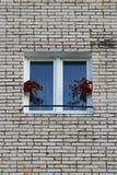 有开花的秋海棠的两个罐在一个窗口在砖房子里 免版税图库摄影