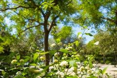有开花的精美植物在城市公园 库存图片