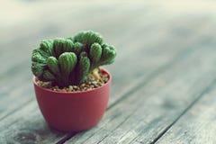 有开花的花的一点cuctus盆栽植物在木桌上有迷离绿色庭院背景 库存照片