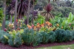 有开花的花的悉尼百年公园 库存图片