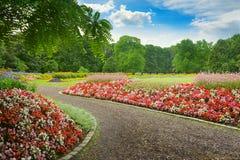 有开花的花的美丽的胡同 免版税库存图片