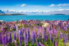 有开花的花的Mountain湖在前景 免版税库存照片