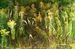 有开花的草的狂放的草甸 免版税库存图片
