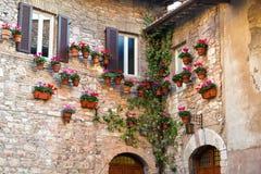 有开花的仙客来的许多花盆在一个老石房子的墙壁上 免版税库存照片