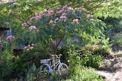 有异乎寻常的植物的Provencal庭院 库存图片
