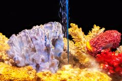 有异乎寻常的鱼和多彩多姿的珊瑚的一个家庭水族馆 库存图片