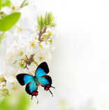 有异乎寻常的蝴蝶的春天开花 免版税库存照片