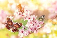 有异乎寻常的蝴蝶的春天开花 库存照片