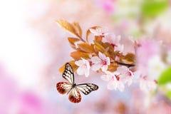 有异乎寻常的蝴蝶的春天开花 图库摄影